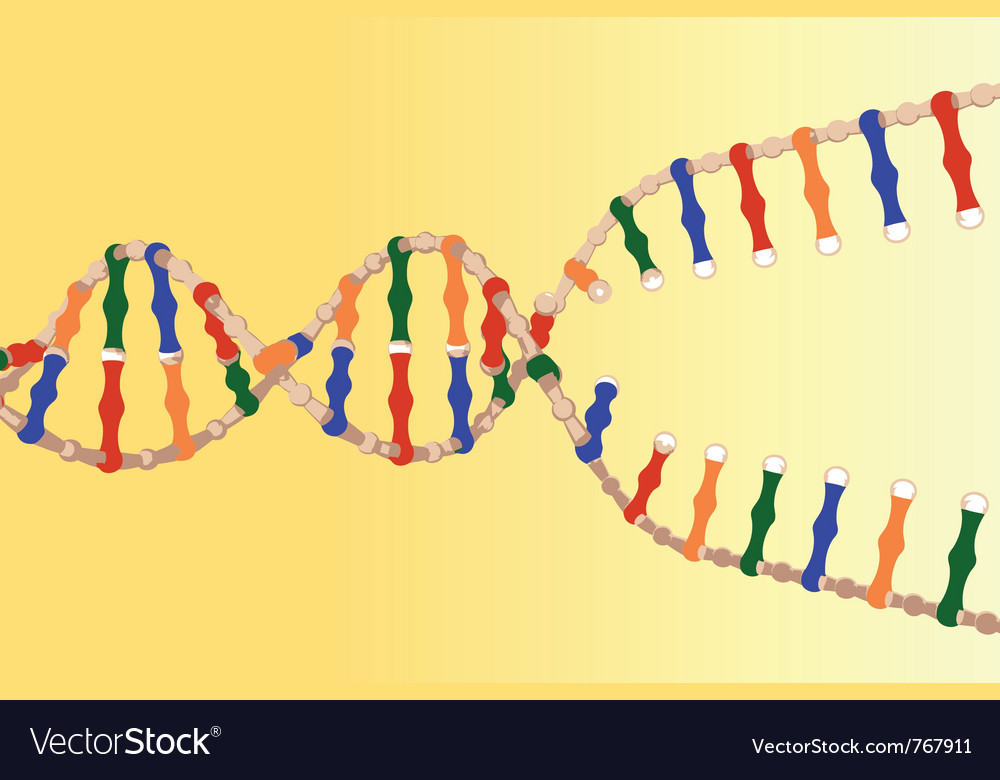 Separated dna strands vector | Price: 1 Credit (USD $1)