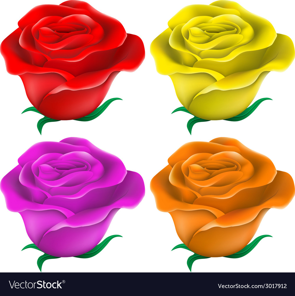 Colourful roses vector | Price: 1 Credit (USD $1)