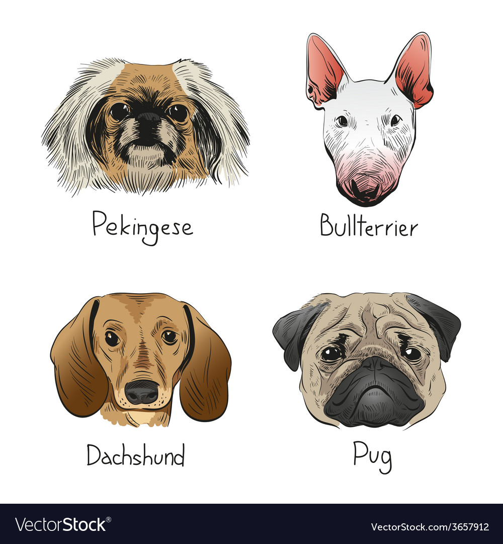 Drawing dog icons vector | Price: 1 Credit (USD $1)