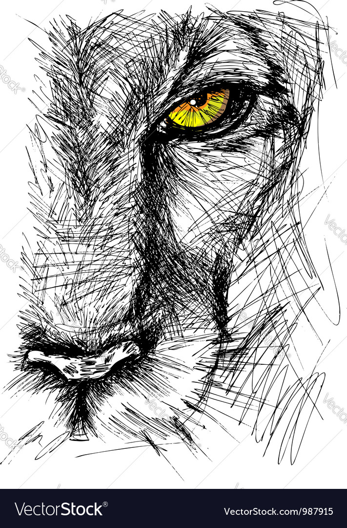 Hand drawn sketch of a lion vector | Price: 1 Credit (USD $1)