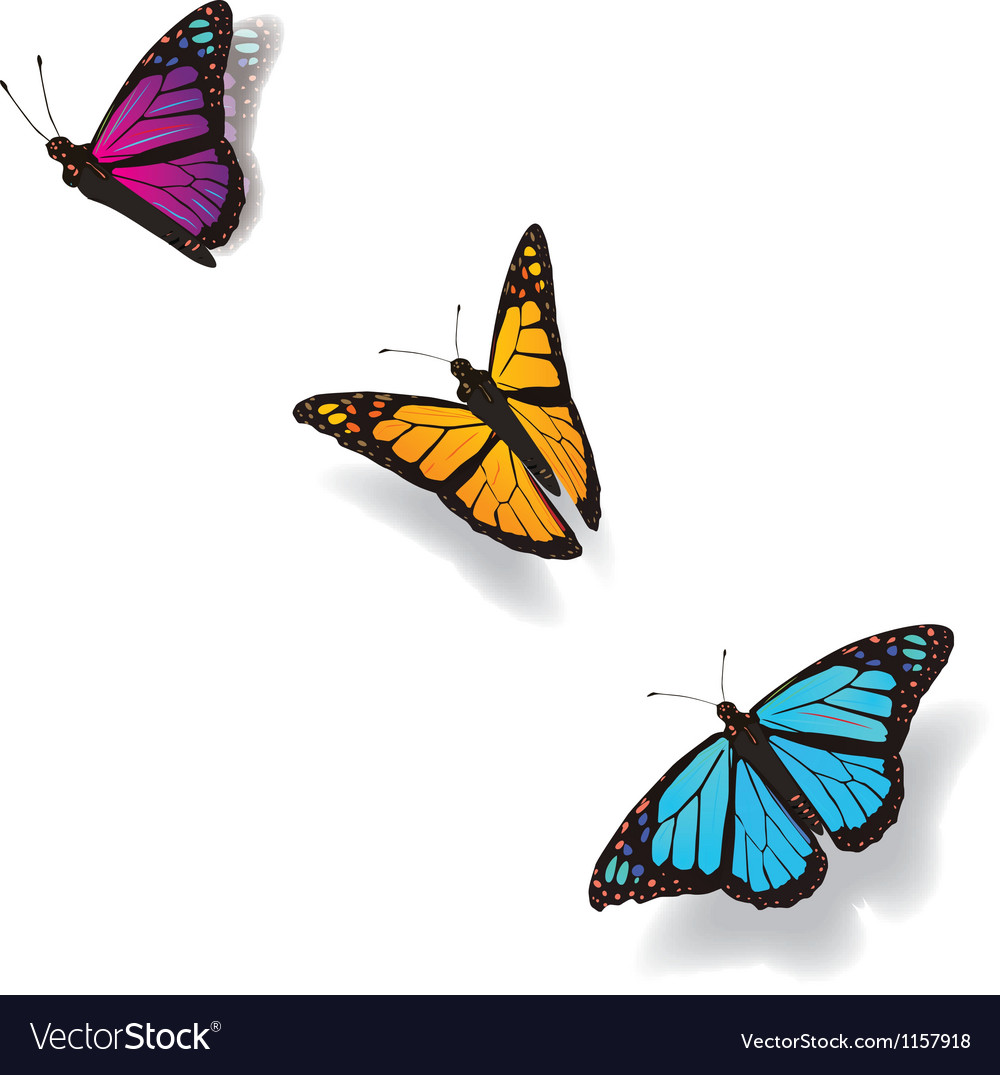 Flying butterflies vector | Price: 1 Credit (USD $1)