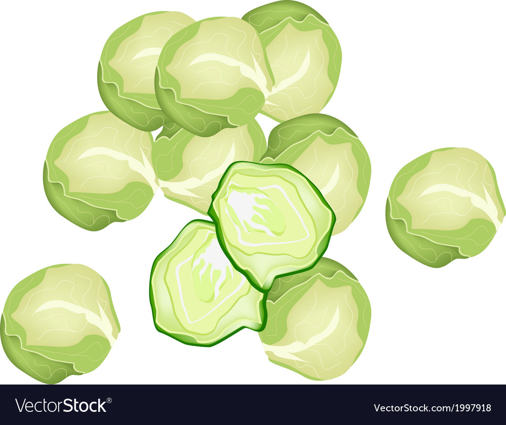 Fresh brussels sprout on a white background vector   Price: 1 Credit (USD $1)