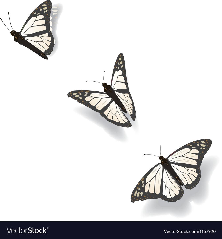 Flying butterflies vector | Price: 1 Credit (USD $1)