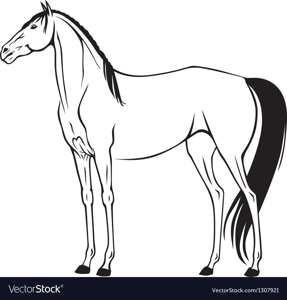 Beautiful horse vector | Price: 1 Credit (USD $1)