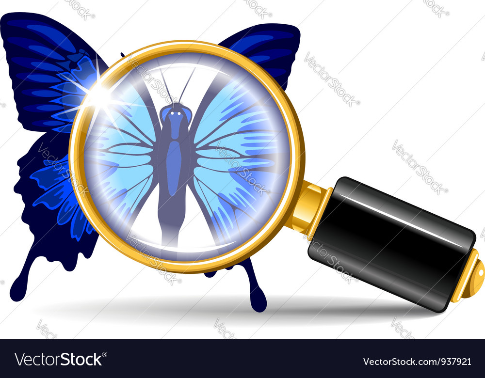 Magnifier and butterfly vector | Price: 3 Credit (USD $3)