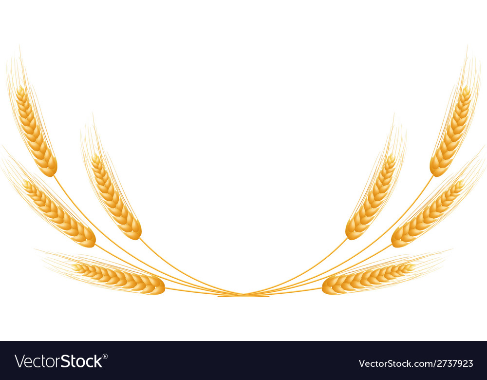 Ripe ears wheat set isolated detailed template vector | Price: 1 Credit (USD $1)