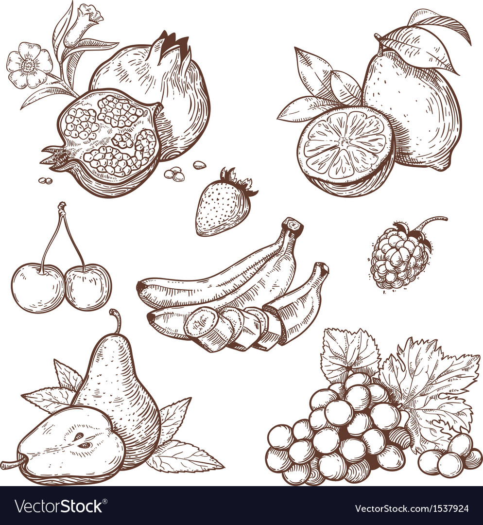 Icon fruits vector | Price: 1 Credit (USD $1)