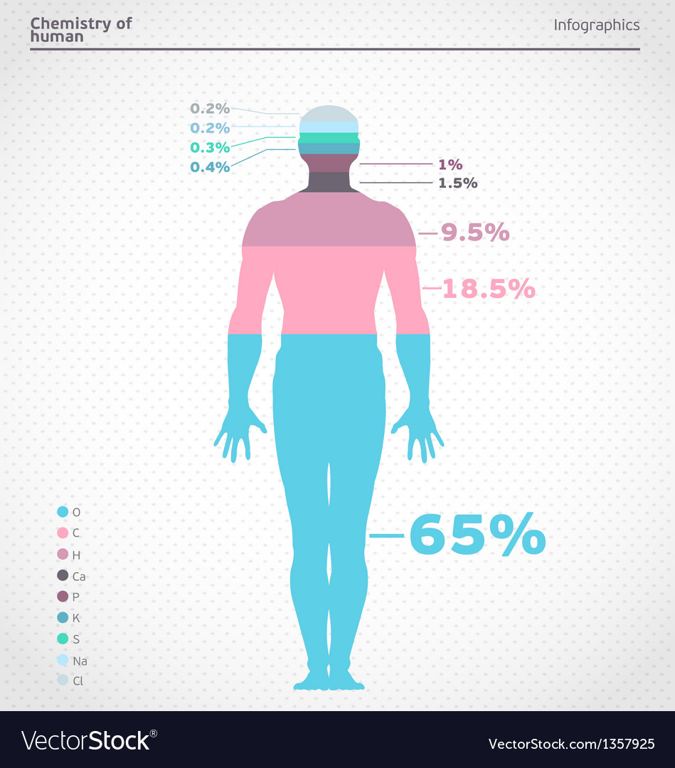 Human infographics vector   Price: 1 Credit (USD $1)