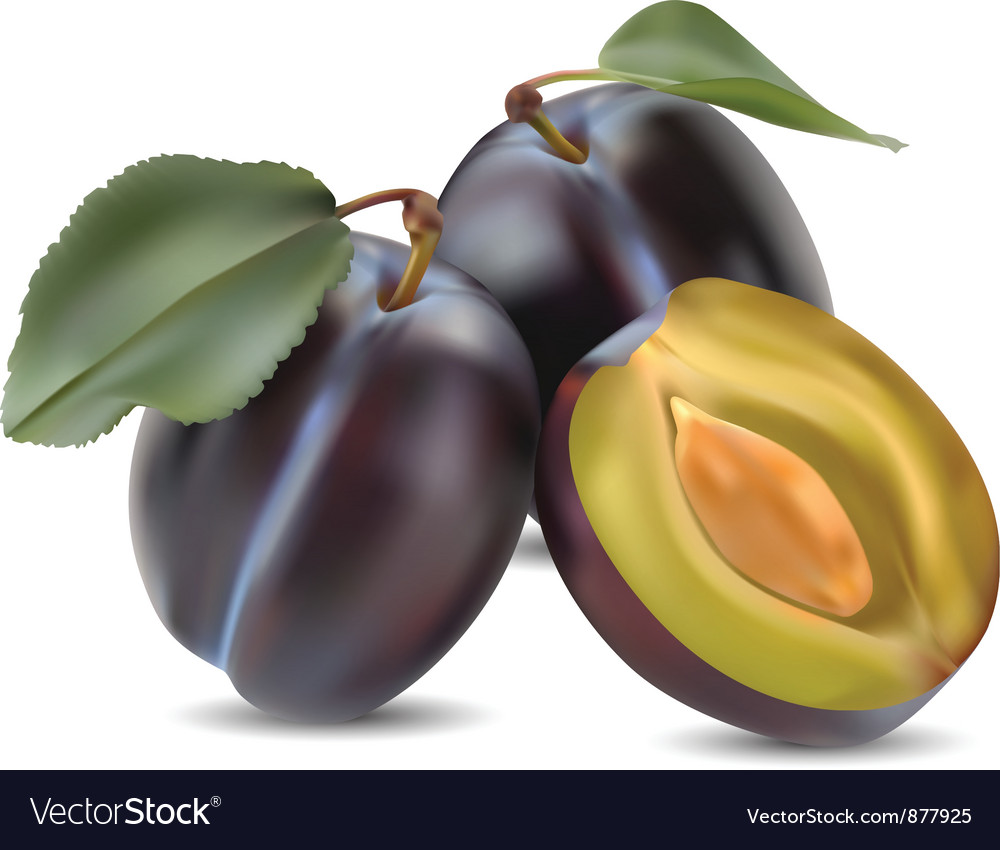 Plums vector | Price: 1 Credit (USD $1)