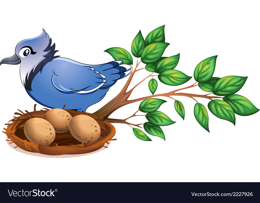 A blue bird at the branch of a tree with a nest vector | Price: 1 Credit (USD $1)
