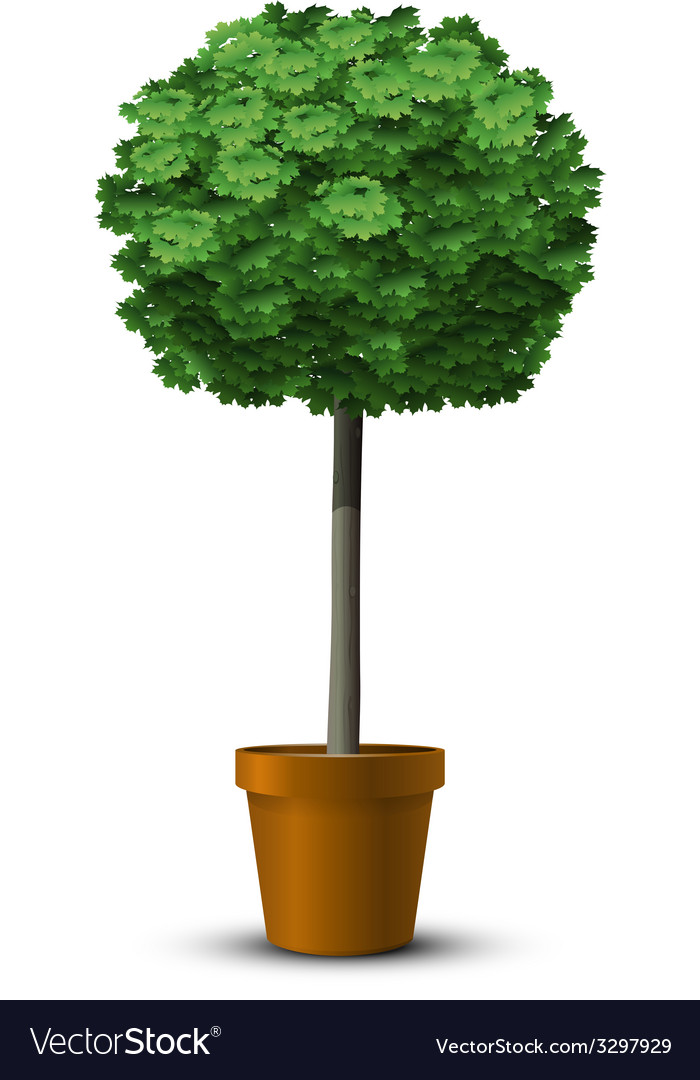 Maple tree globosum vector   Price: 3 Credit (USD $3)