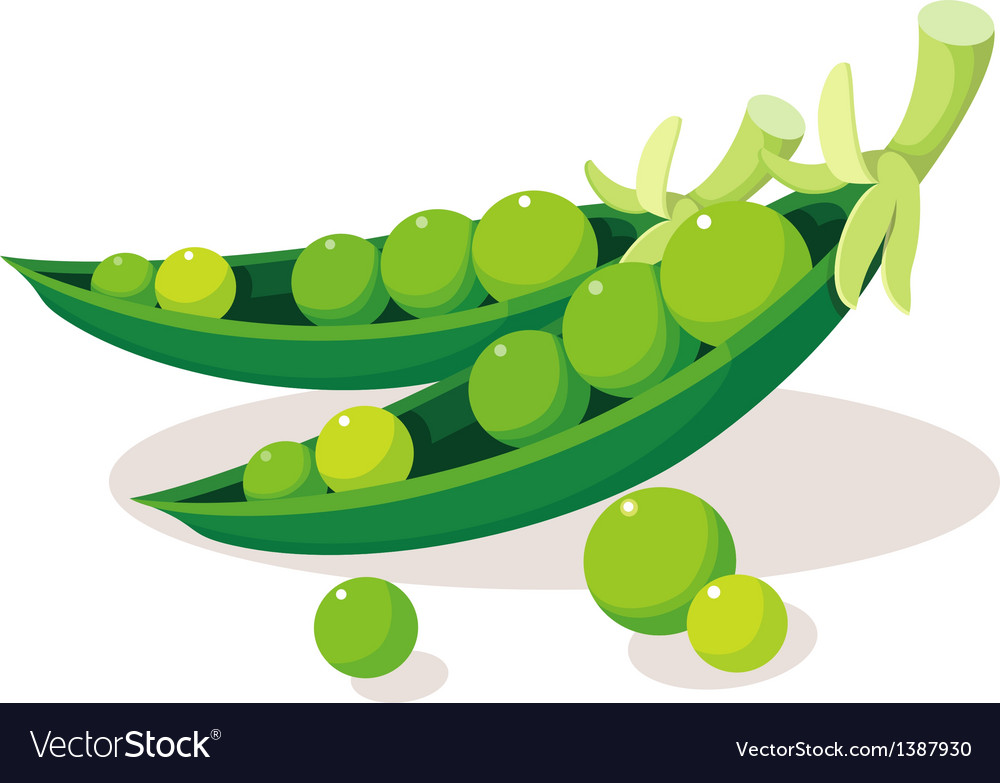 Icon bean vector | Price: 1 Credit (USD $1)