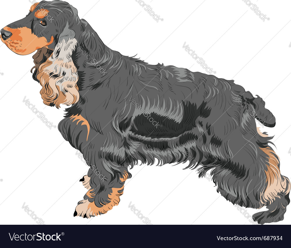 English cocker spaniel dog vector | Price: 3 Credit (USD $3)