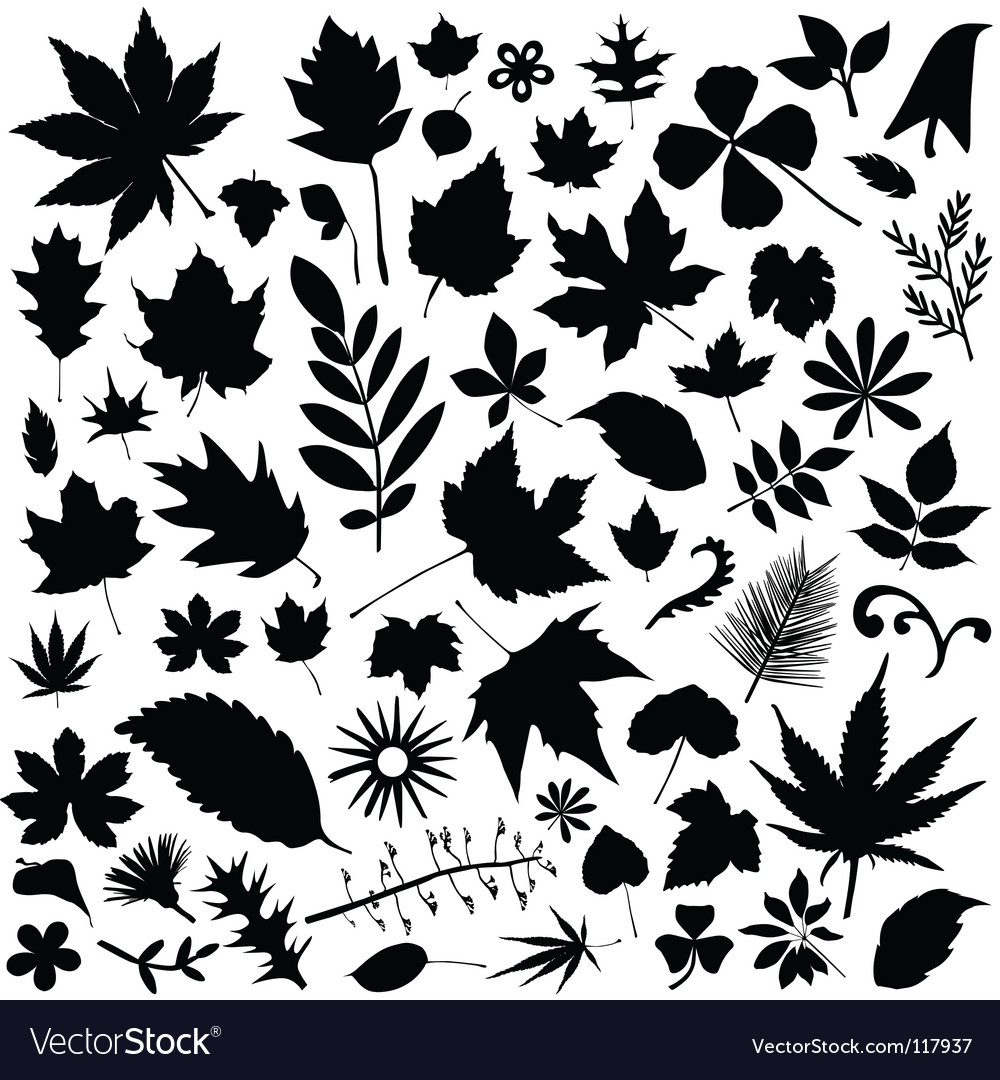 Leaf set vector | Price: 1 Credit (USD $1)