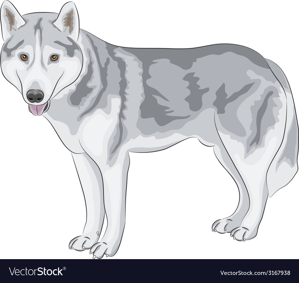 Czechoslovakian wolfdog vector | Price: 1 Credit (USD $1)