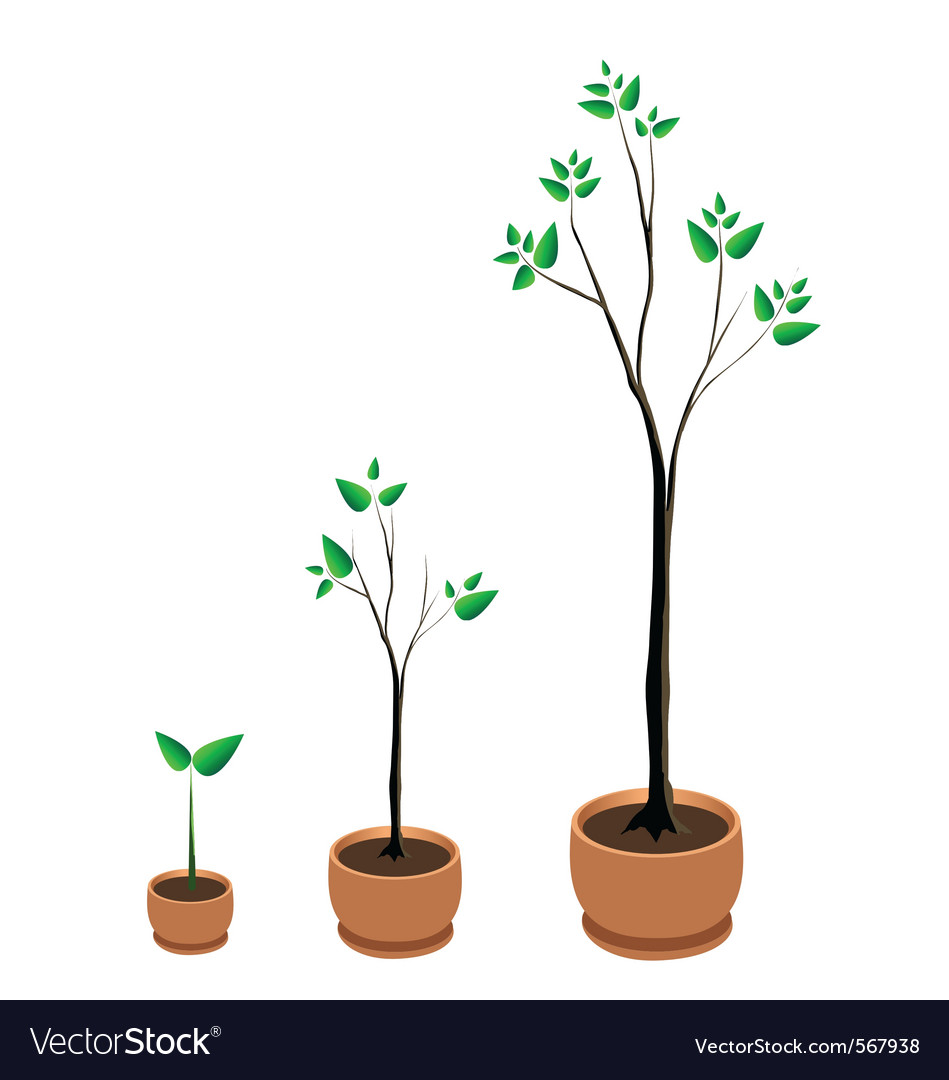 Tree growing vector | Price: 1 Credit (USD $1)