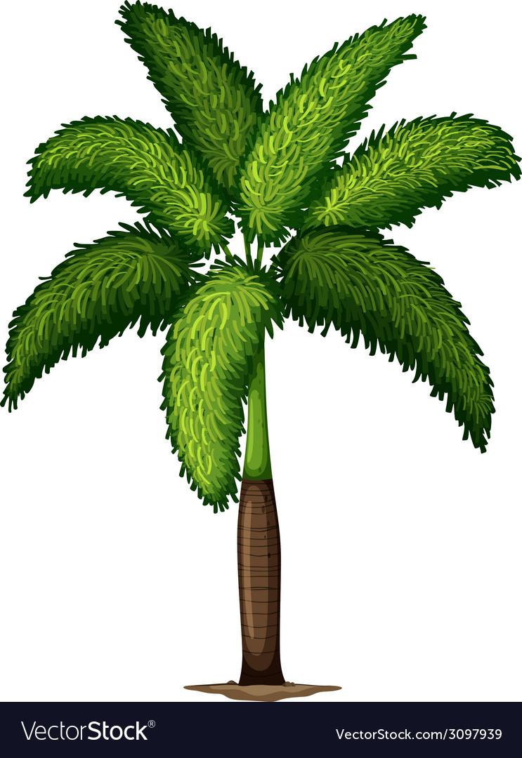 A wodyetia bifurcata plant vector | Price: 1 Credit (USD $1)