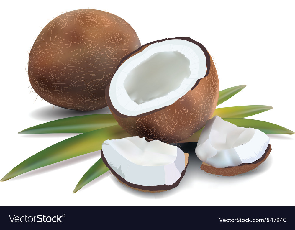 Coconut leaves vector | Price: 3 Credit (USD $3)