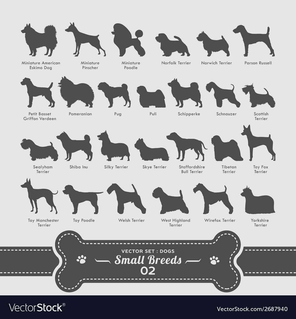 Dogs set - small breeds collection 02 vector | Price: 1 Credit (USD $1)