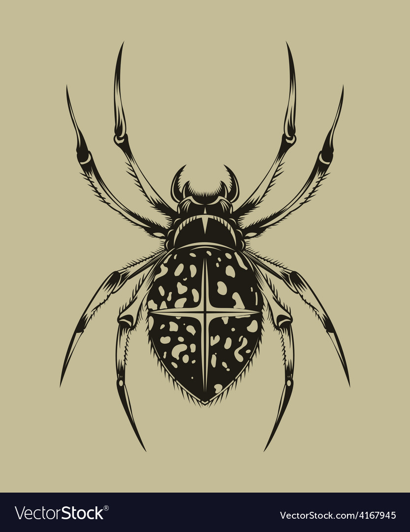 Spider vector | Price: 1 Credit (USD $1)
