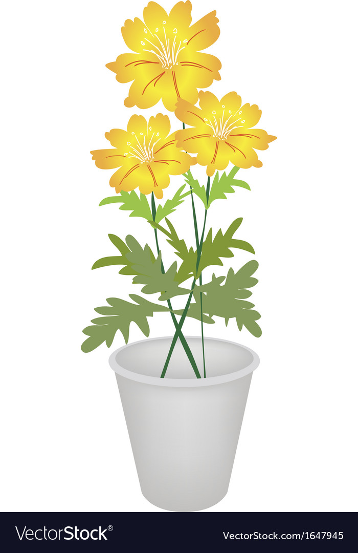 Three cosmos flowers in a flower pot vector | Price: 1 Credit (USD $1)