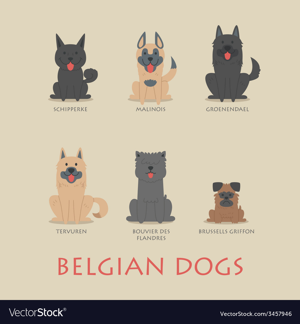 Set of belgian dogs vector | Price: 1 Credit (USD $1)