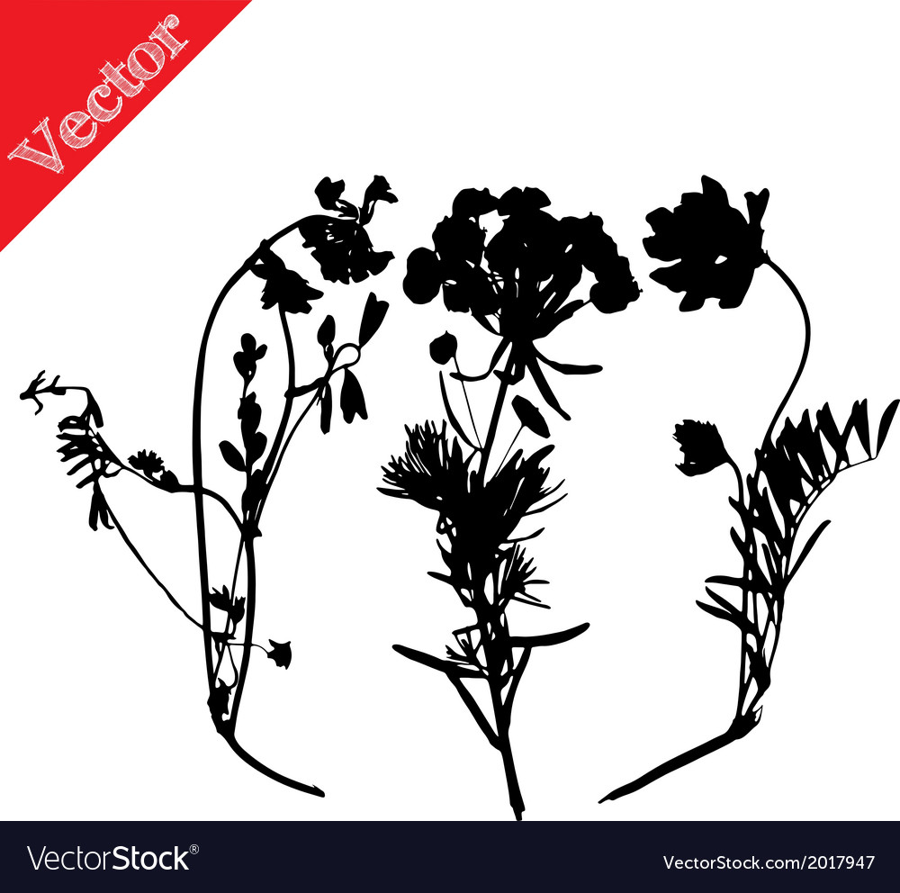 Set with wild flowers silhouettes isolated on vector | Price: 1 Credit (USD $1)
