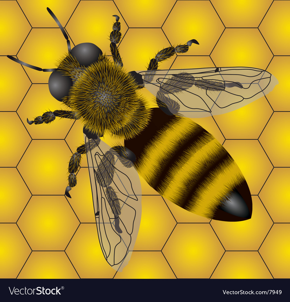 Bee pattern vector | Price: 5 Credit (USD $5)