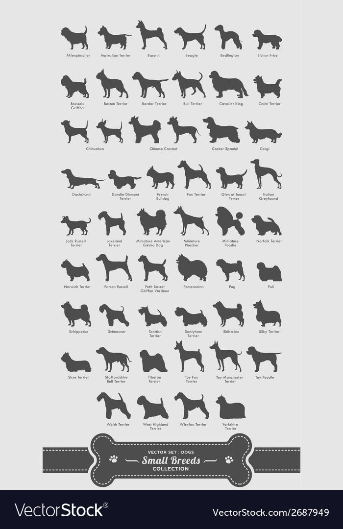 Dog set - small breeds full collection vector | Price: 1 Credit (USD $1)