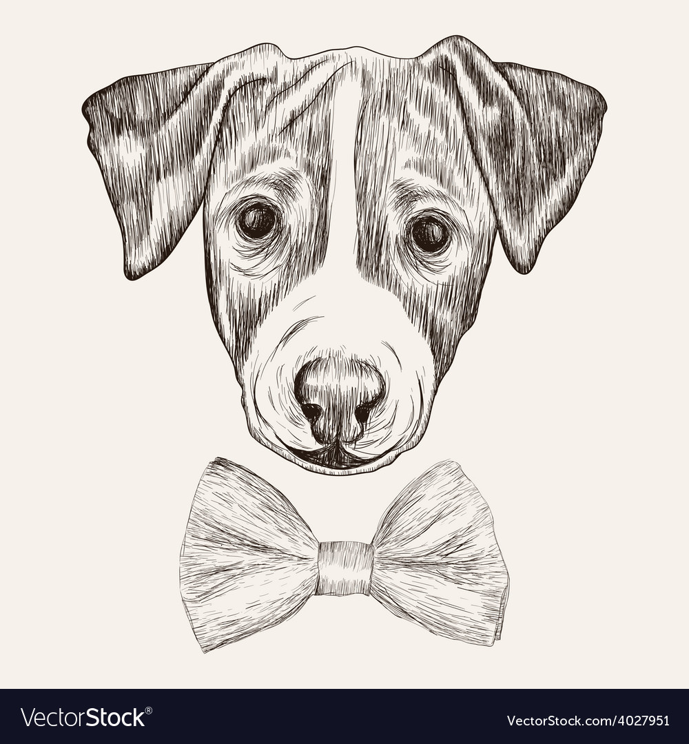 Sketch jack russell terrier dog with bow tie hand vector | Price: 1 Credit (USD $1)