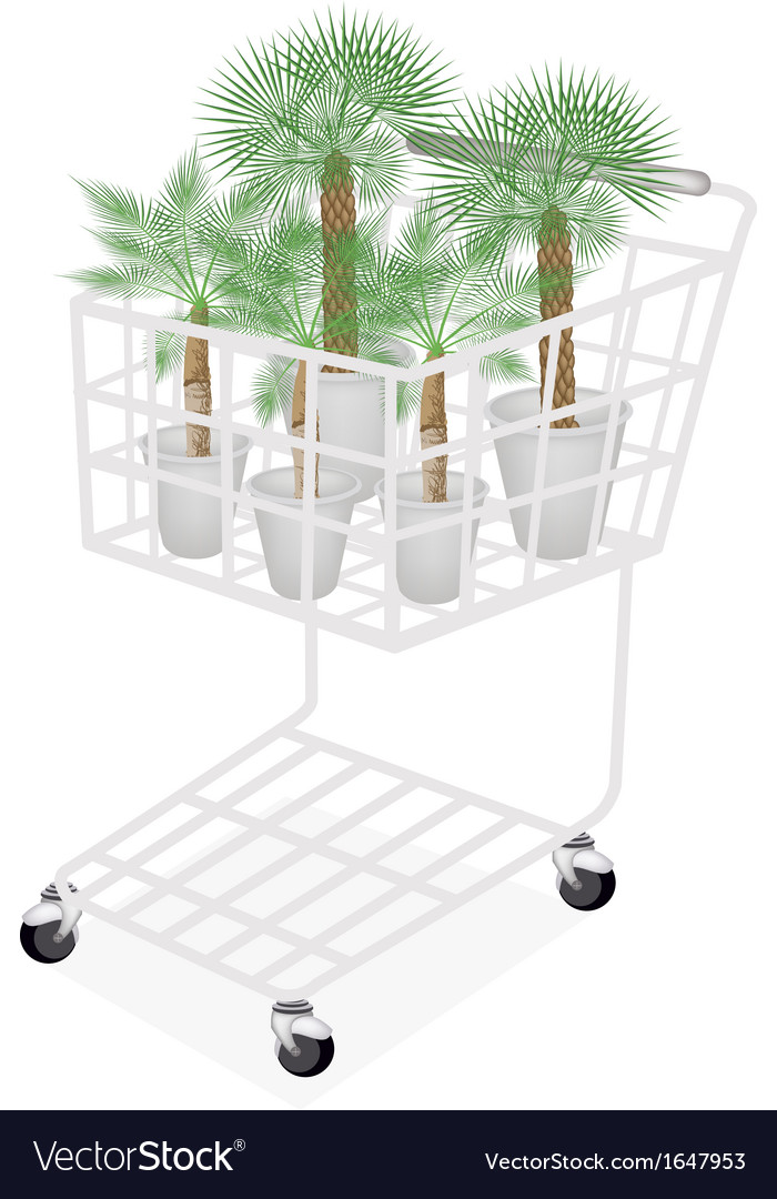Palm tree in a shopping cart vector | Price: 1 Credit (USD $1)