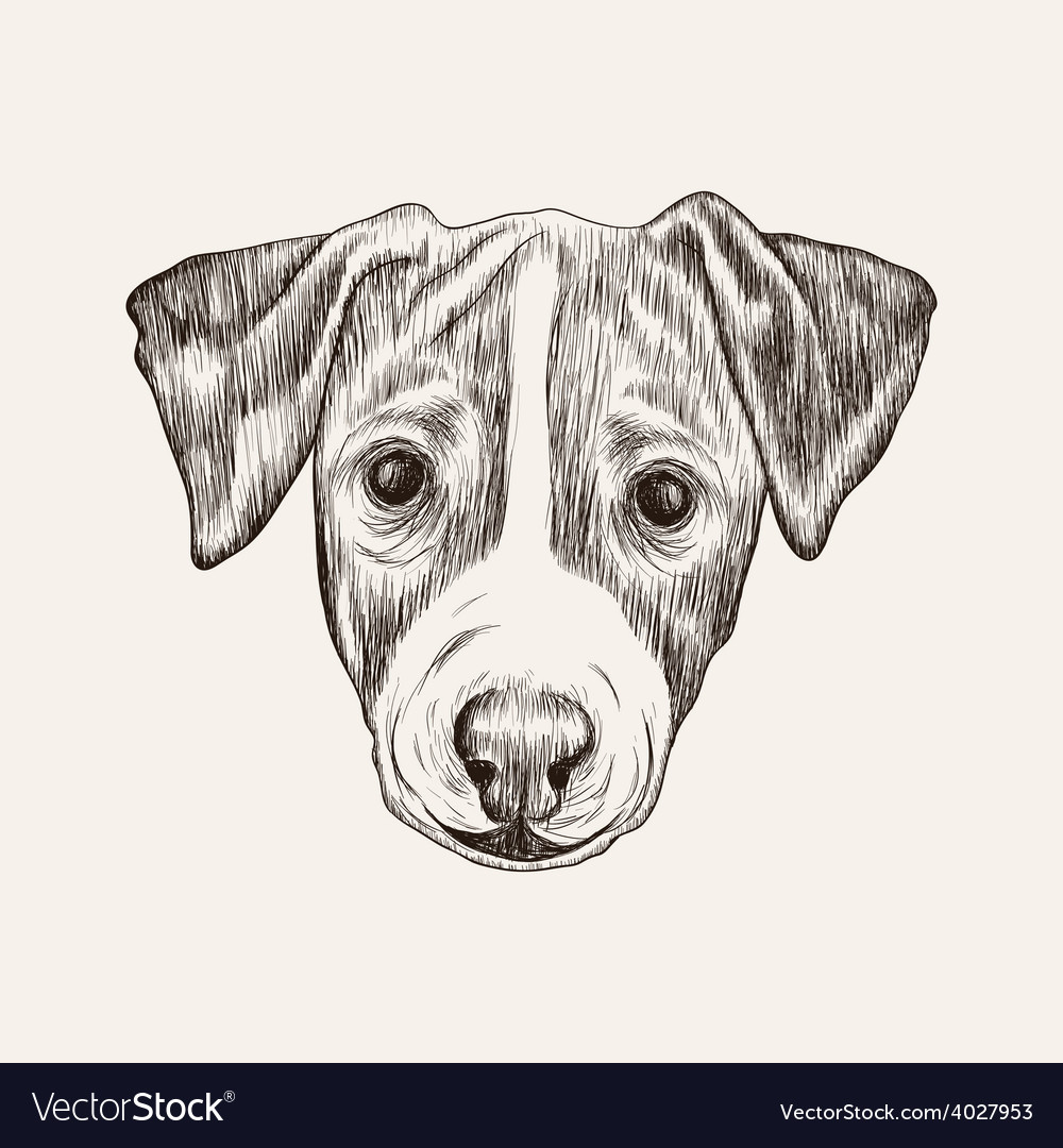 Sketch jack russell terrier dog hand drawn face vector | Price: 1 Credit (USD $1)