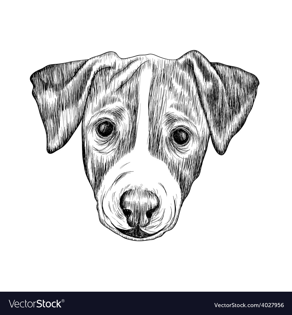 Sketch jack russell terrier dog hand drawn vector | Price: 1 Credit (USD $1)