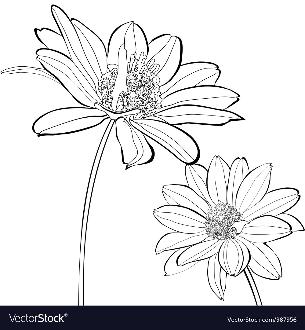 Template for card with gerber flowers vector | Price: 1 Credit (USD $1)