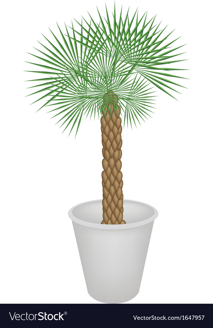 A palm tree in flower pot vector   Price: 1 Credit (USD $1)