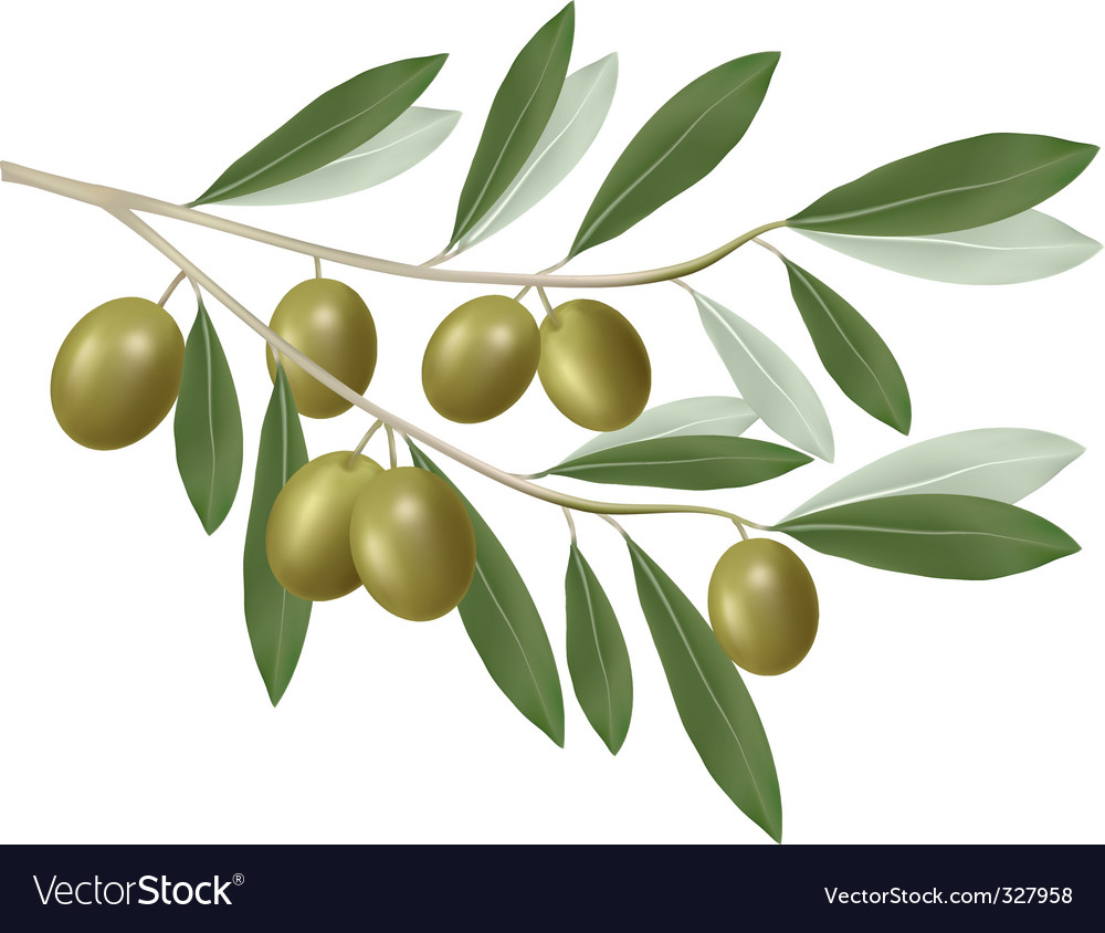 Olive green vector   Price: 1 Credit (USD $1)