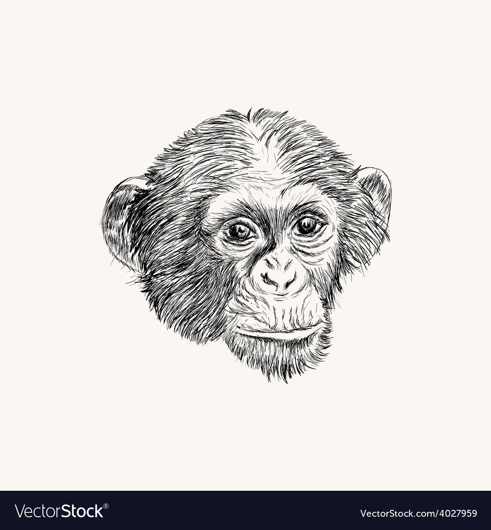 Sketch monkey face hand drawn doodle vector | Price: 1 Credit (USD $1)
