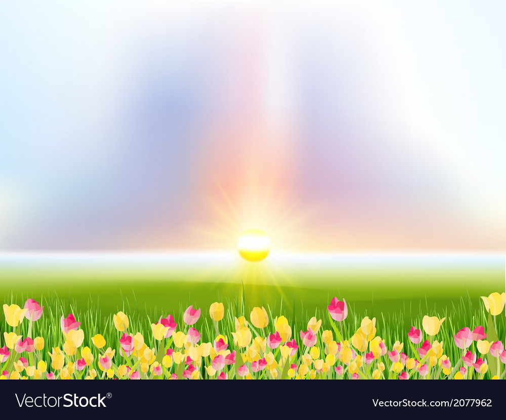 Spring flowers tulips in the sunlight eps 10 vector | Price: 1 Credit (USD $1)