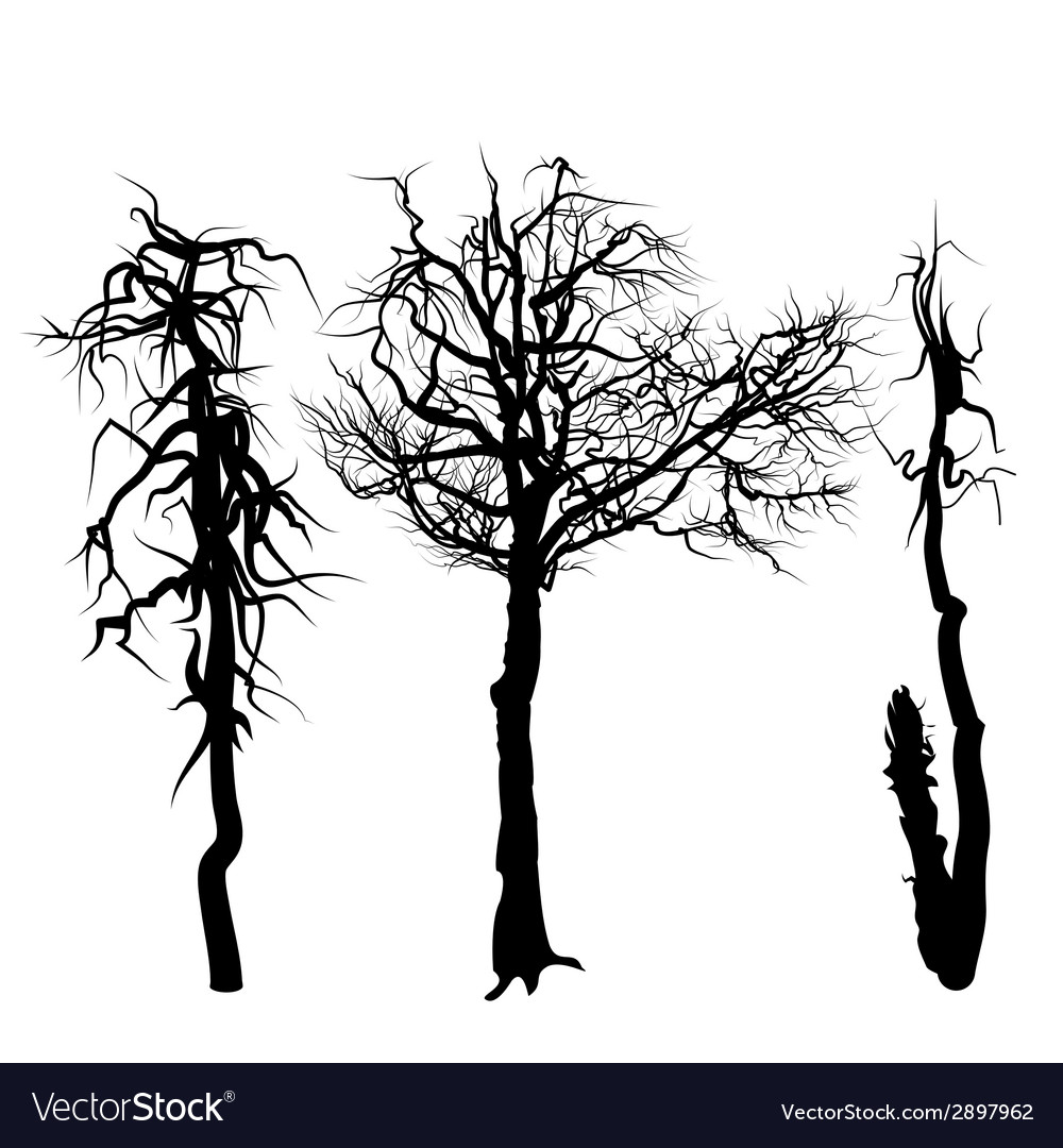 Trees isolated on white background vector | Price: 1 Credit (USD $1)