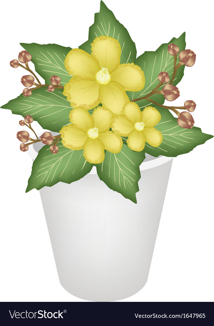 Yellow simpor flowers in a flower pot vector | Price: 1 Credit (USD $1)