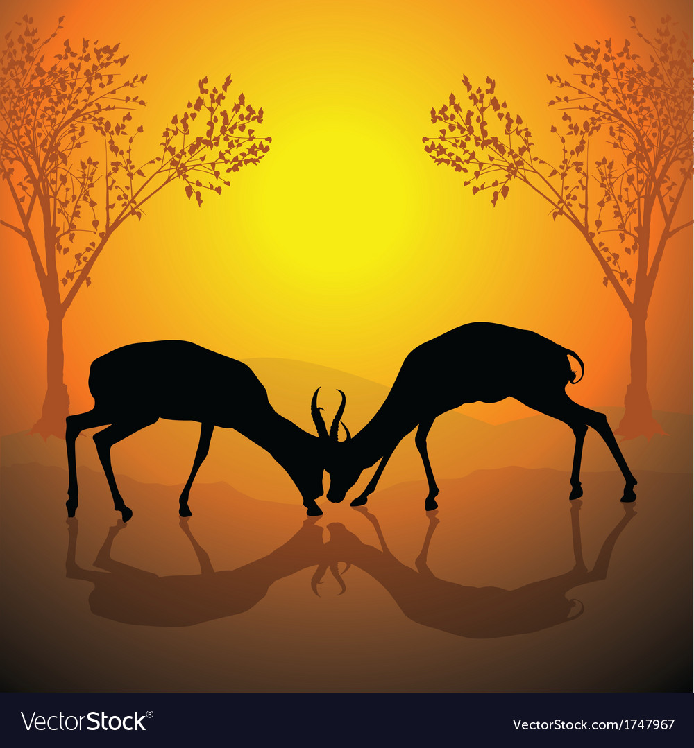 Fighting antelopes vector | Price: 1 Credit (USD $1)
