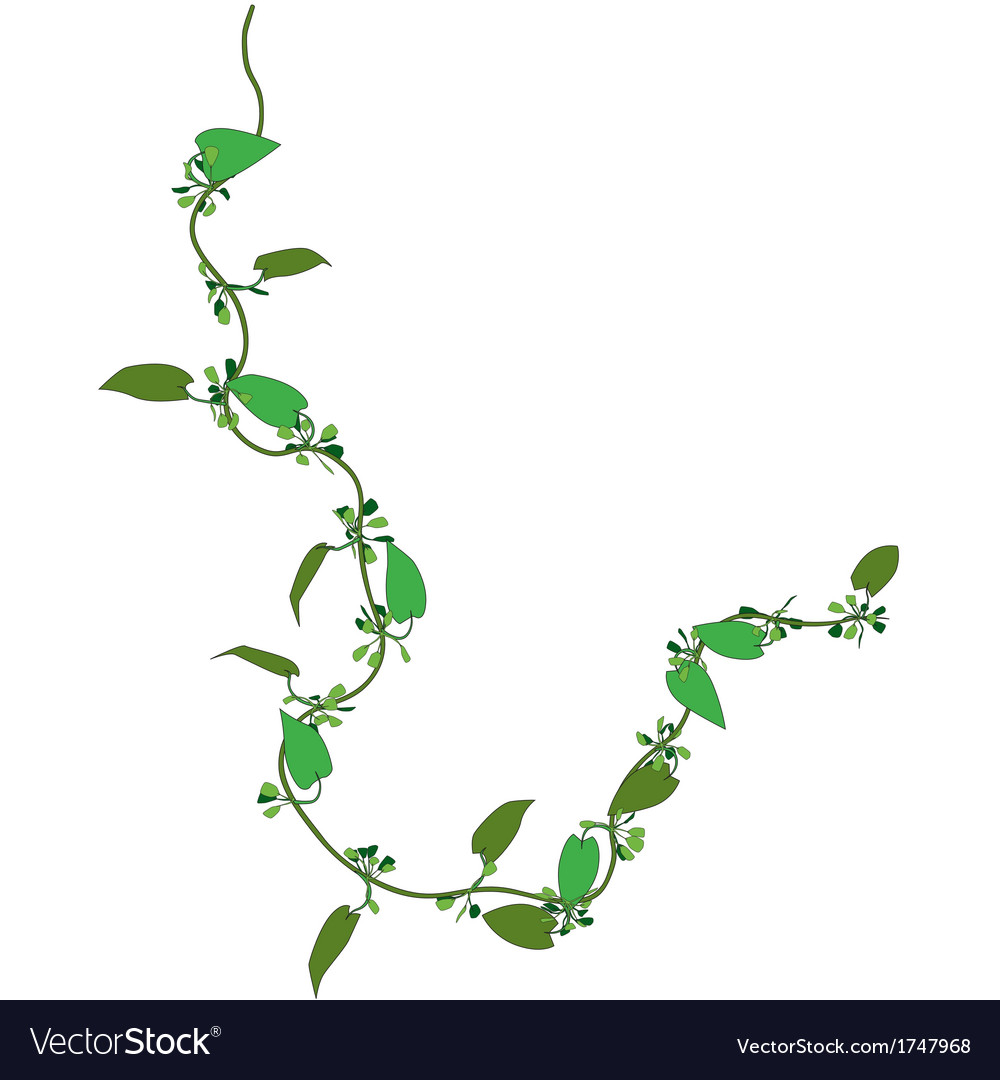 Creepy plant vector | Price: 1 Credit (USD $1)