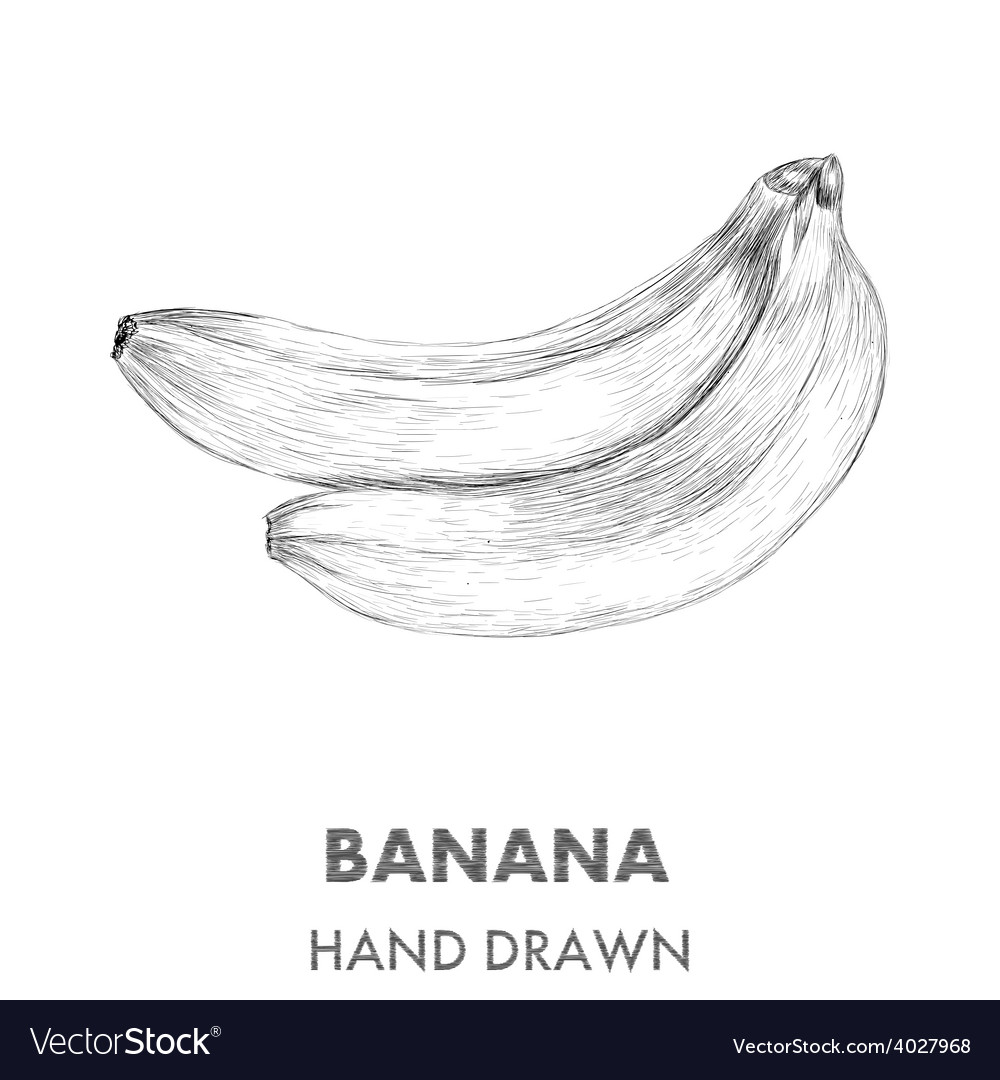 Sketch of banana hand drawn fruit collection vector | Price: 1 Credit (USD $1)