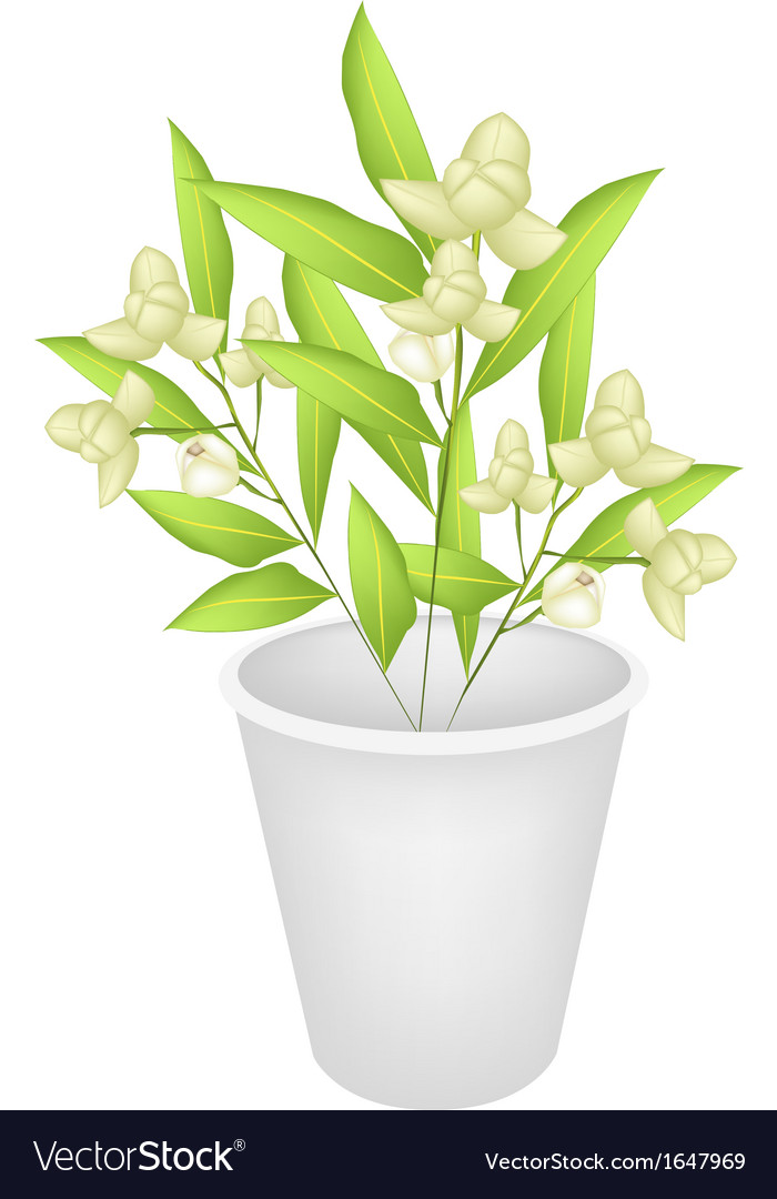 Beautiful ylang ylang flowers in a flower pot vector | Price: 1 Credit (USD $1)