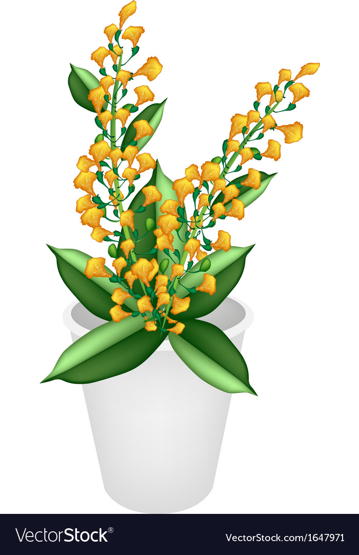Beautiful yellow padauk flower in a flower pot vector | Price: 1 Credit (USD $1)