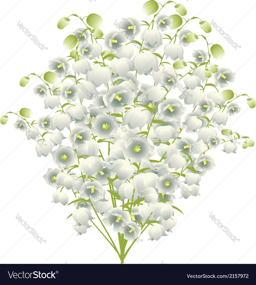 Lily of the valley4 vector | Price: 1 Credit (USD $1)