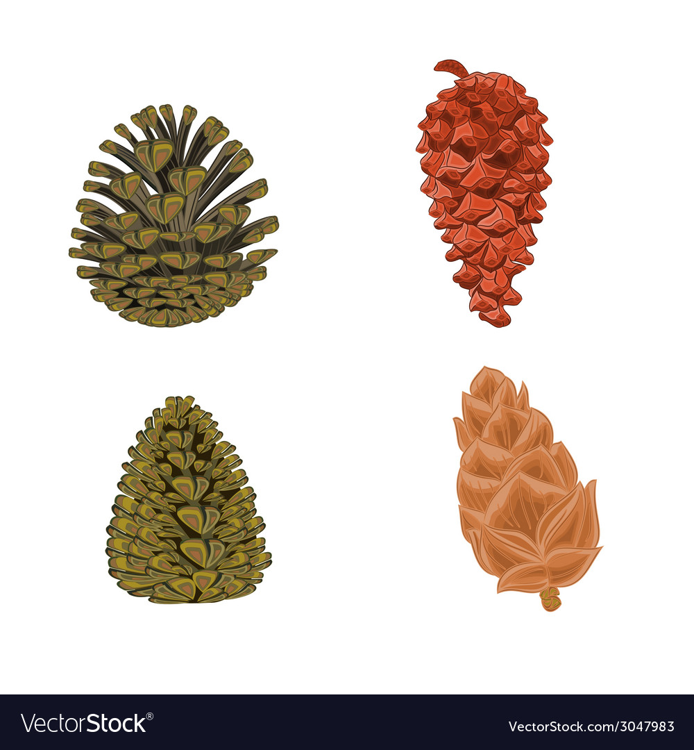 Four pine cones larch cones vector | Price: 1 Credit (USD $1)