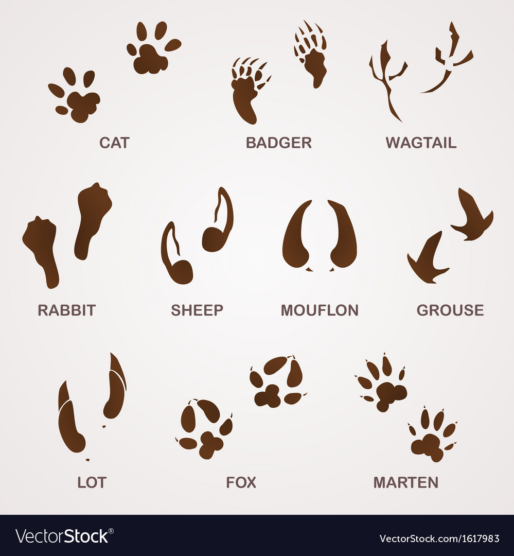 Wildlife tracks vector | Price: 1 Credit (USD $1)