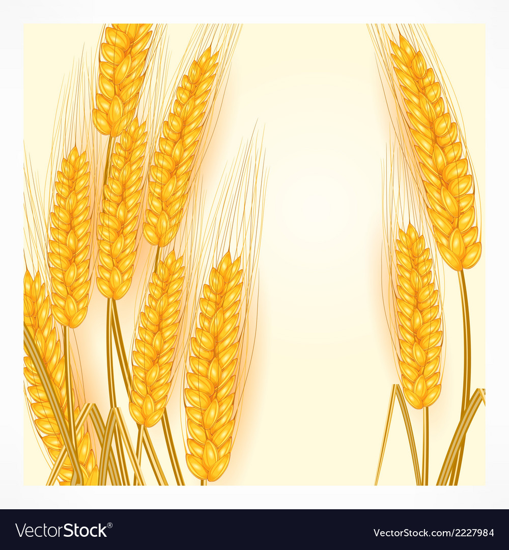 Ears of wheat on white vector | Price: 1 Credit (USD $1)