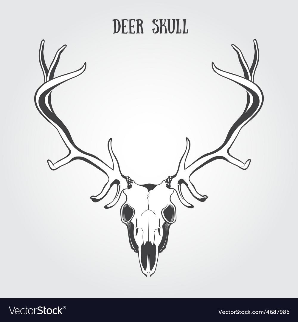 Deer skull vector | Price: 1 Credit (USD $1)
